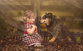 Обои друзья, малышка, забор, удивление, листва, девочка, собака
