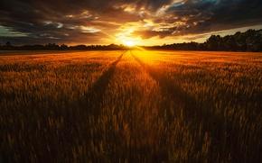 Обои поле, свет, солнце, лето