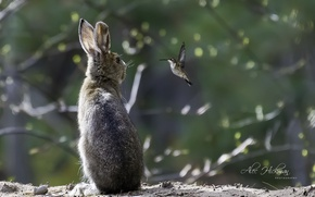 Картинка птица, заяц, колибри, разговор