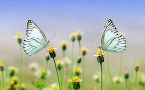 Картинка макро, бабочки, цветы, природа