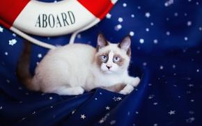 Картинка кошка, кот, взгляд, синий, котенок, фон, темный, пятна, ткань, лежит, котёнок, мордашка, звездочки, темно-синий, спасательный ...