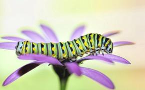 Картинка цветок, гусеница, фон