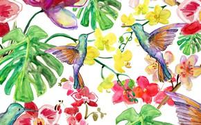 Картинка Цветы, Листья, Птицы, Фон, Текстура, Калибри