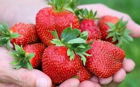 Картинка ягоды, руки, клубника