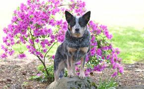 Обои друг, цветы, собака