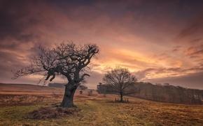 Картинка поле, закат, дерево