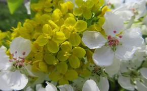 Картинка цветы, весна 2018, Mamala ©, жёлтые, белые
