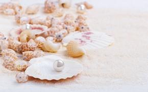 Картинка песок, ракушки, sand, marine, still life, жемчужина, seashells, perl