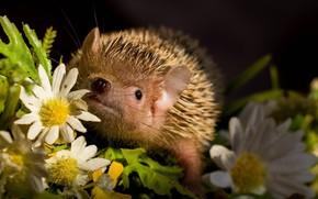 Картинка цветы, малыш, ежик, кроха