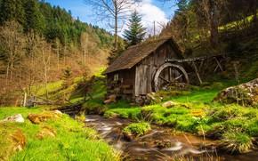Обои зелень, лес, небо, трава, деревья, пейзаж, ветки, природа, ручей, камни, весна, склон, холм, мельница, водоем, ...