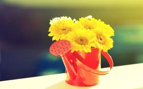 Картинка цветы, букет, лейка, желтые герберы