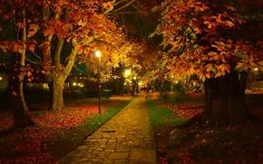 Картинка Ночь, Осень, Деревья, Фонари, Парк, Fall, Листва, Дорожка, Night, Park, Autumn, Colors, Trees, Leaves, Path