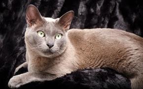 Картинка глаза, кот, усы, фон