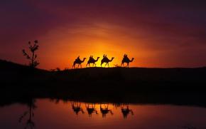 Картинка отражение, силуэты, верблюды, караван