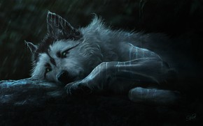 Картинка взгляд, ночь, волк