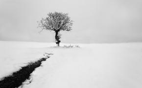 Обои зима, снег, дерево
