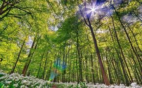 Картинка Зелень, Природа, Весна, Лес