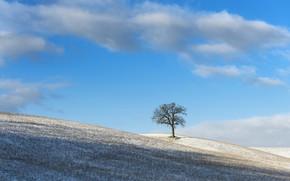 Картинка зима, небо, дерево, утро