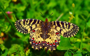Картинка Макро, Бабочка, Macro, Butterfly