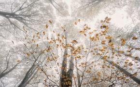 Картинка осень, лес, деревья, ветки, природа, листва, дымка
