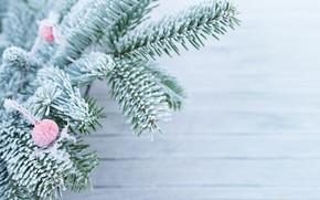 Картинка зима, снег, ветки, елка, мороз, winter, snow, fir tree