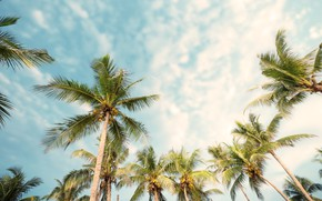 Картинка пляж, лето, пальмы, summer, beach, beautiful, paradise, palms, tropical