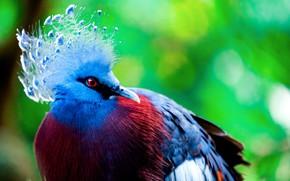 Картинка природа, птица, хоботок