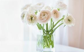 Картинка белые, азиатский, лютик, ранункулюс, цветы, ваза