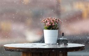 Обои всплески, боке, кпли, дождь, ливень, мокро, фон, стол, макро, цветы