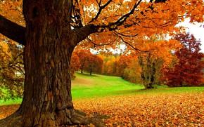 Обои листья, осень, деревья