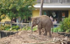 Картинка город, слон, зоо