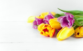 Картинка цветы, весна, colorful, тюльпаны, fresh, flowers, beautiful, tulips, spring, bright