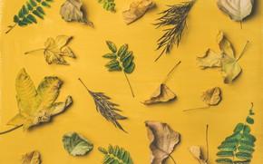 Картинка листья, фон, Autumn