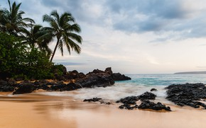Картинка Beach, Water, Sand, Ocean, Stones, Waves, Palm Tree