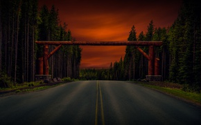 Картинка дорога, лес, деревья, арка, брёвна
