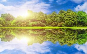 Картинка Солнце, Природа, Деревья, Река, Пейзаж