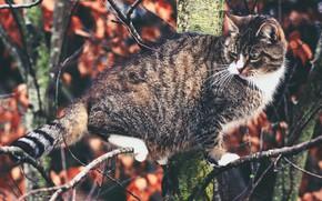 Картинка кошка, кот, дерево, на дереве, котэ, котейка