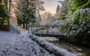 Обои деревья, мост, снег, зима