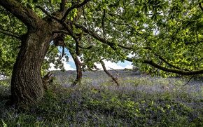 Картинка цветы, природа, дерево
