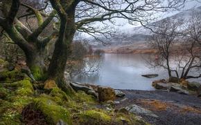 Картинка деревья, пейзаж, горы, озеро, камни, Уэльс