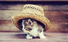 Обои шляпа, доски, kittens, милый, котенок, кот, hat