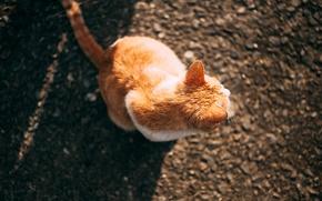 Картинка кот, рыжий, сидит