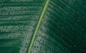 Картинка капли, макро, брызги, природа, лист, зеленый, прожилки