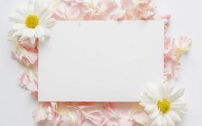 Картинка цветы, ромашки, лепестки, paper, petals, chamomiles