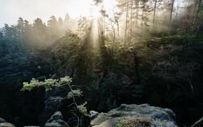 Картинка лес, свет, горы