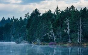 Картинка лес, деревья, природа, озеро