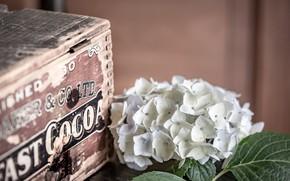 Картинка коробка, ящик, гортензия