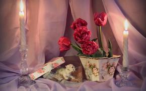 Обои огонь, занавески, подсвечники, собачка, натюрморт, тюльпаны, тюль, красные, коробка, свечи