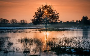 Картинка природа, дерево, утро