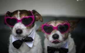 Картинка собаки, дом, очки